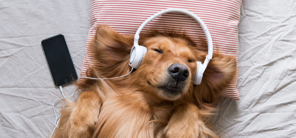 Using Music to Calm Your Dog