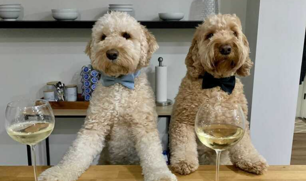 5 Ideas for National Doggy Date Night