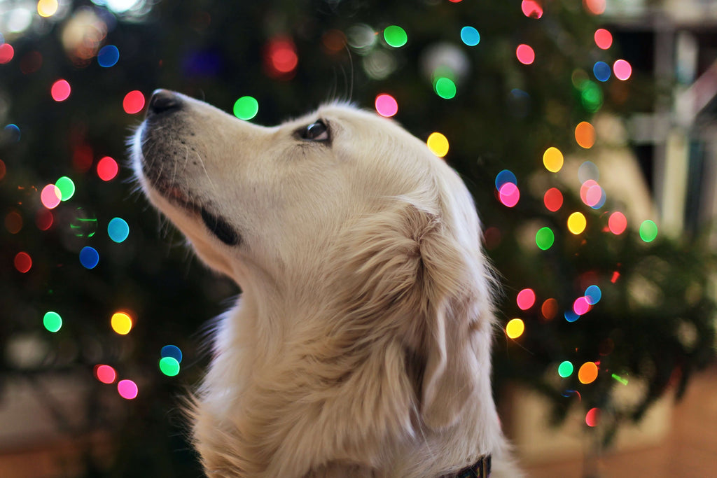 Holiday Calming Tips for Humans & Dogs