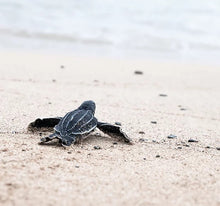Load image into Gallery viewer, baby turtle on sand. save our sea life