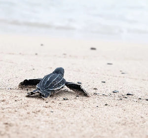 baby turtle on sand. save our sea life