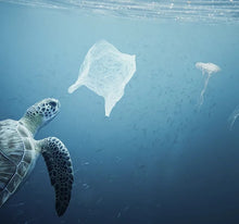 Load image into Gallery viewer, turtle in sea with plastic bag and belly fish, save our sea life