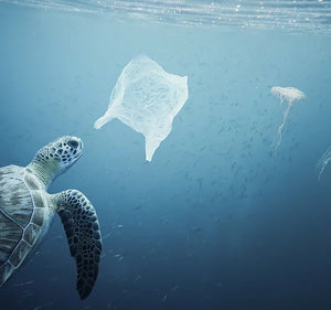 turtle in sea with plastic bag and belly fish, save our sea life