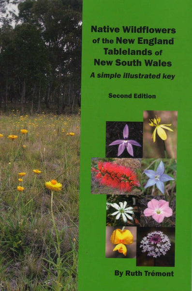 Native Wildflowers New England Tableland