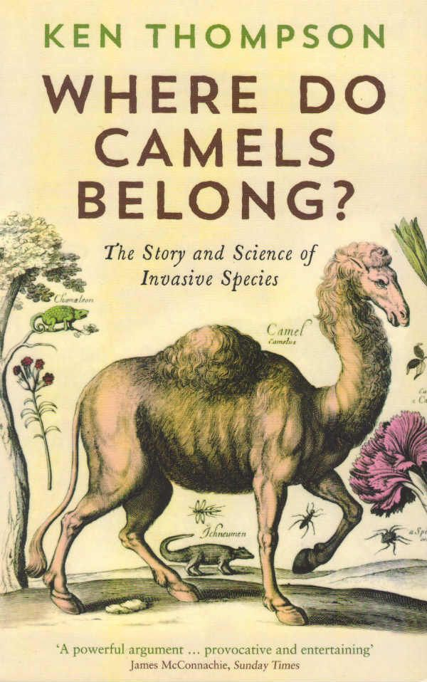 Where do Camels Belong