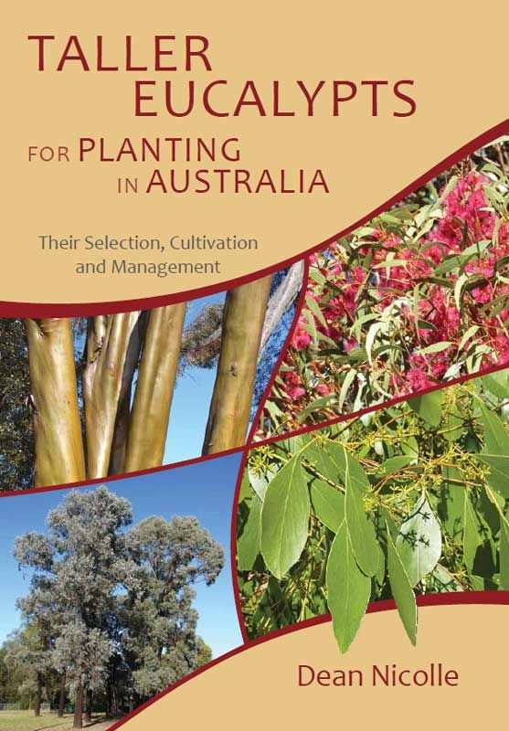 Taller Eucalypts for Planting in Aust