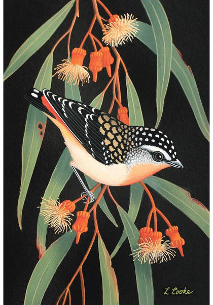 Card Australian Spotted Pardalote