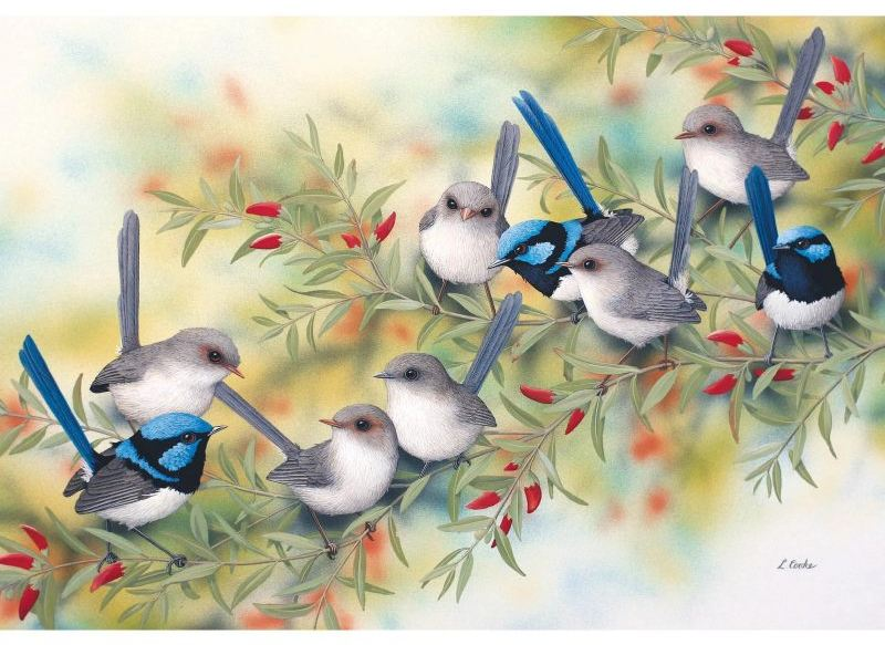 Card Superb Blue Wrens and Swan River Pea