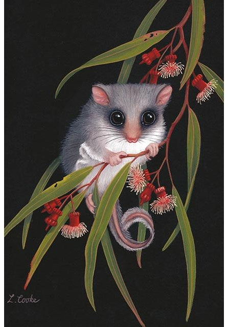 Card Feathertail Glider