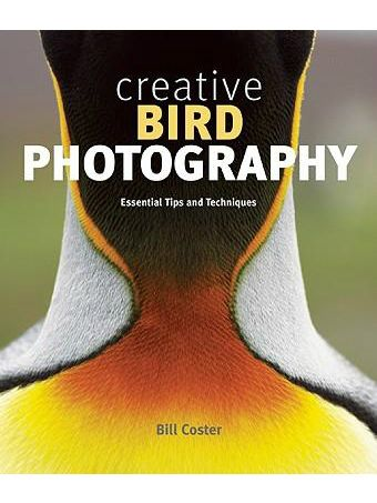 Creative Bird Photography