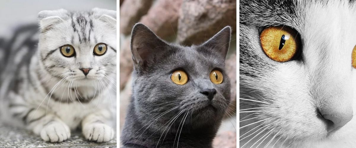 3 Meanings of the Cat's Pupils Shape. What do the Cat's Eyes mean
