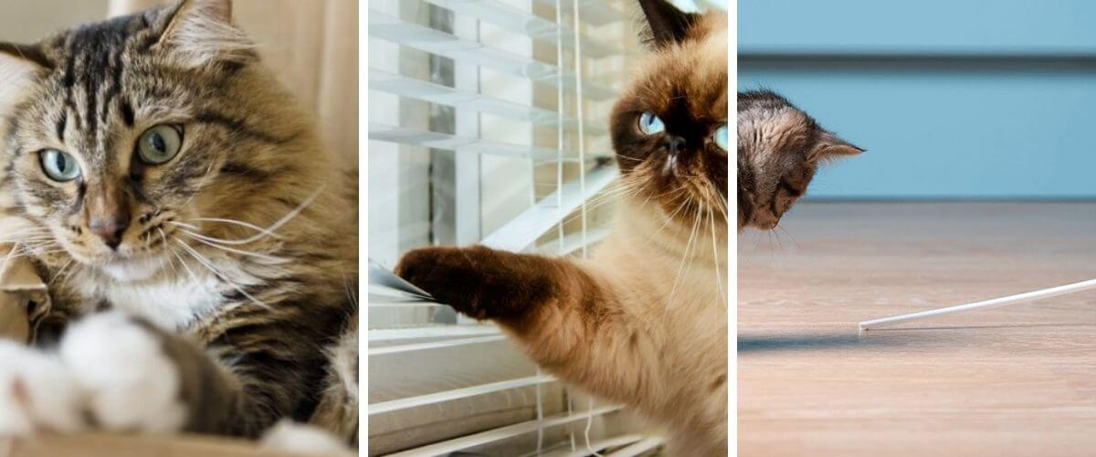 3 toys so your cat doesn't get bored while you're away