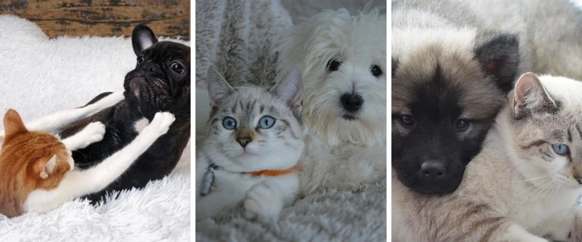 5-tips-for-cats-scared-of-dogs