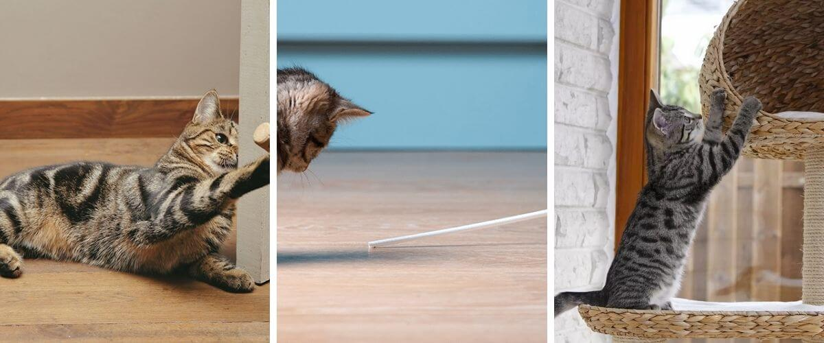 5-ways-to-make-your-cat-feel-more-at-home