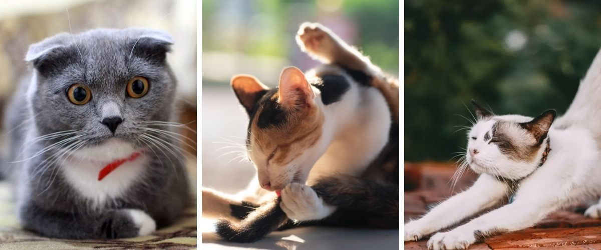 5 Reasons Why Your Cat Smells Bad From the Butt