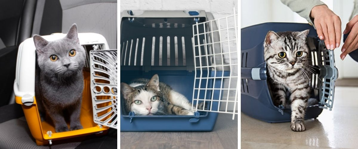 Cat Carrier Bag, Cage and Box What to choose to carry your cat