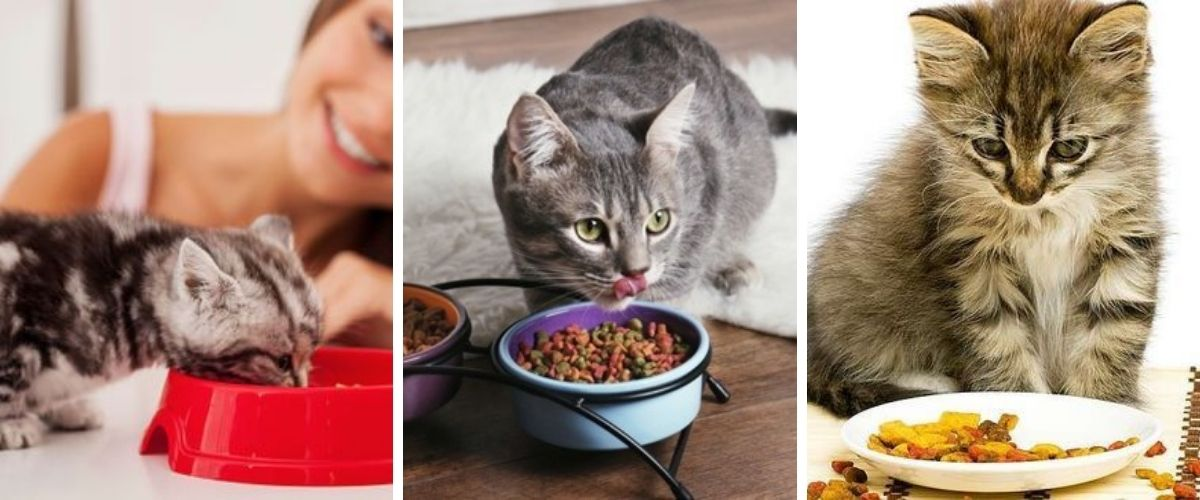 Cat Food Feeding Your Cat Well!