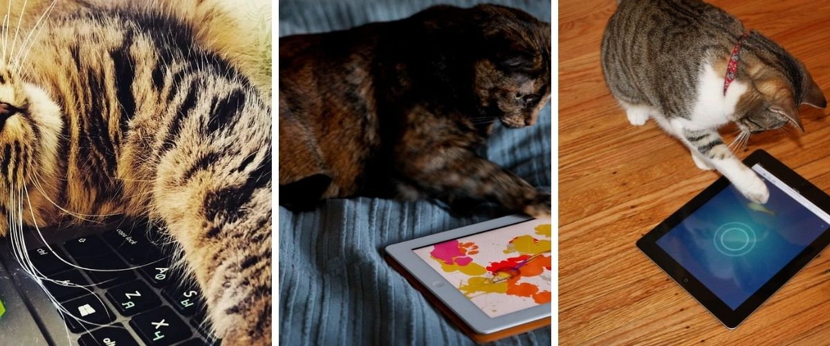 Games for Cats on Android