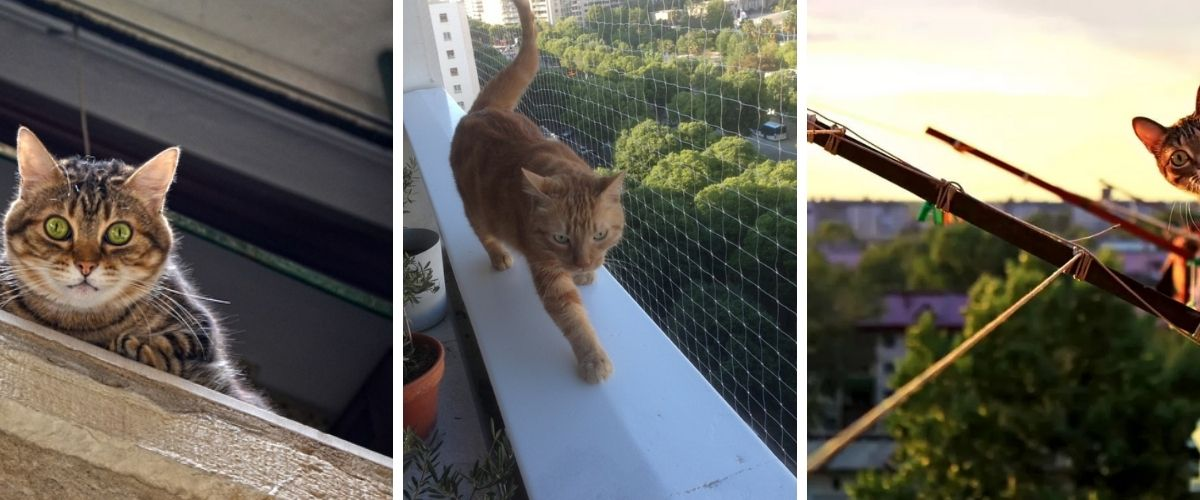 Make-a-Balcony-Safe-for-Cats