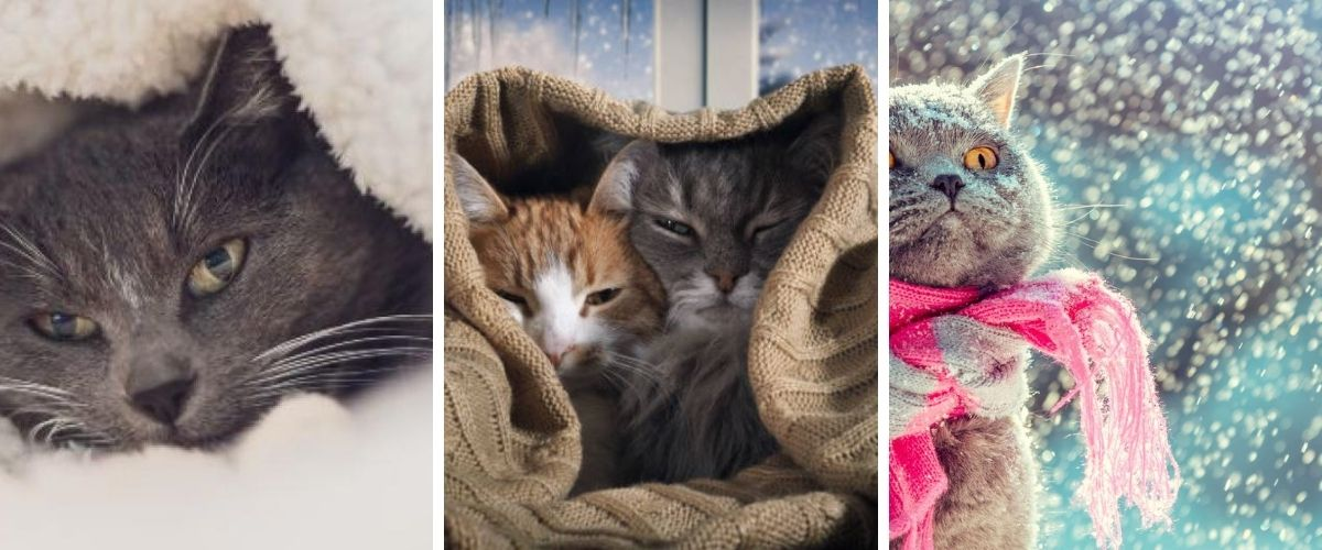 Protect a Cat from the Cold