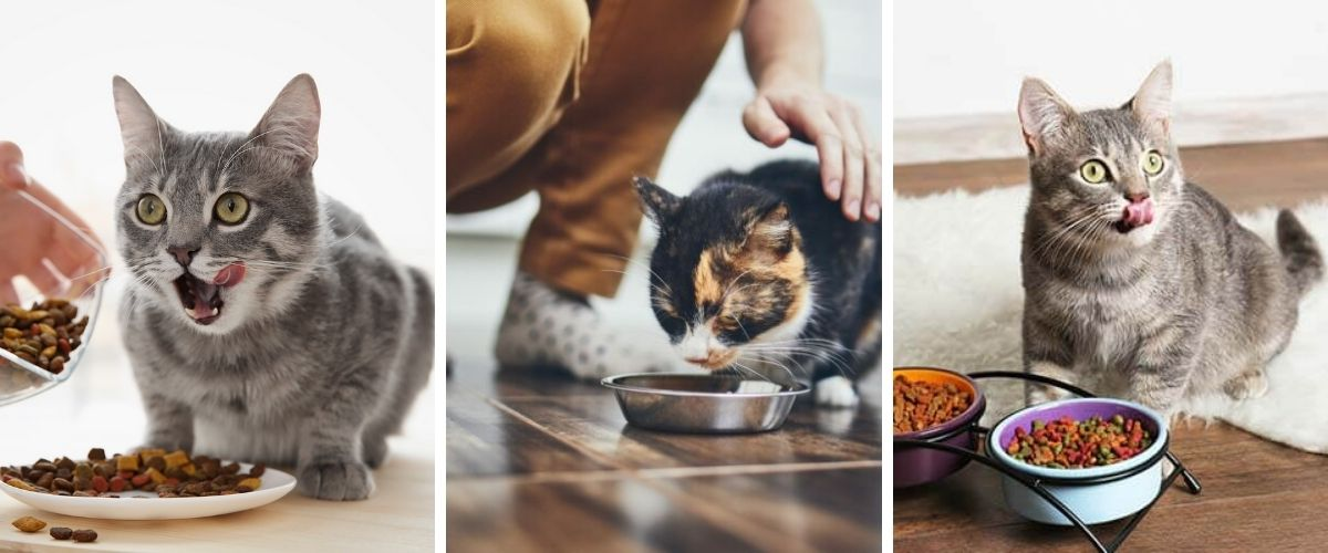 The Best Cat Food - What to choose for your cat