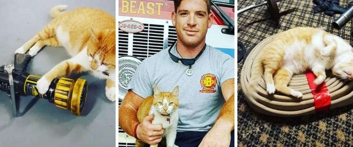 This cat decides to make a fire station his refuge