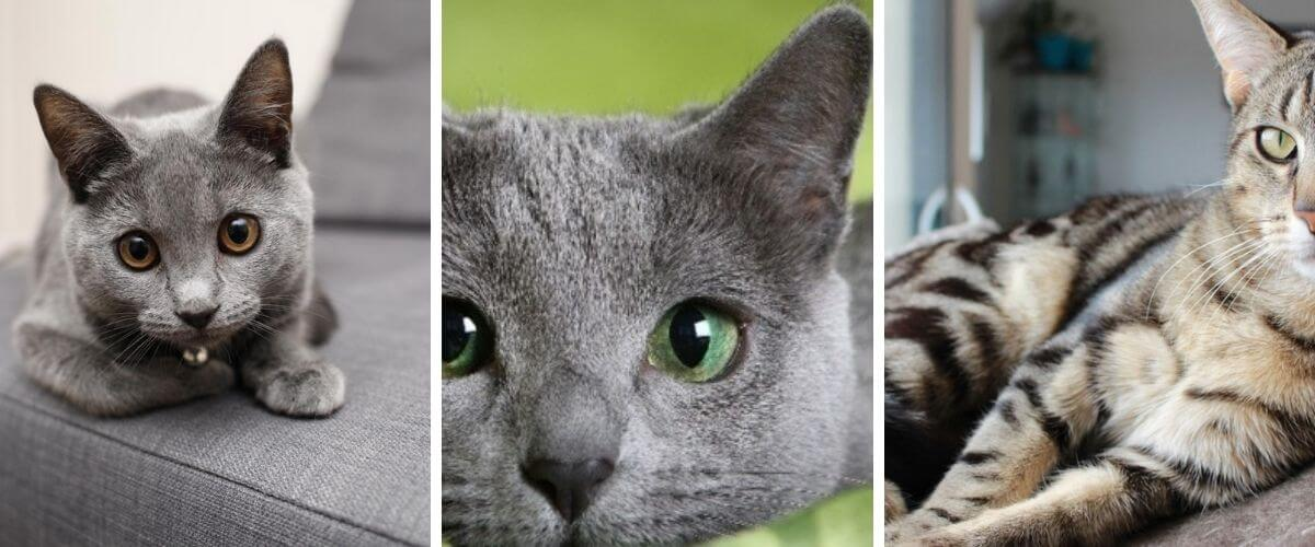 Which breed of cats to choose