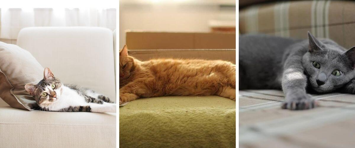 get-that-cat-smell-out-of-your-couch