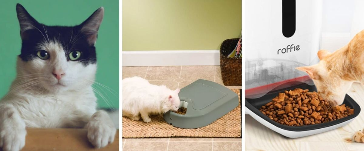 here-are-3-reasons-why-you-need-a-timed-cat-feeder