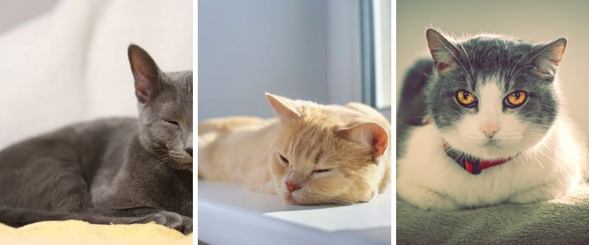 is-it-time-to-say-goodbye-signs-your-pet-cat-is-dying
