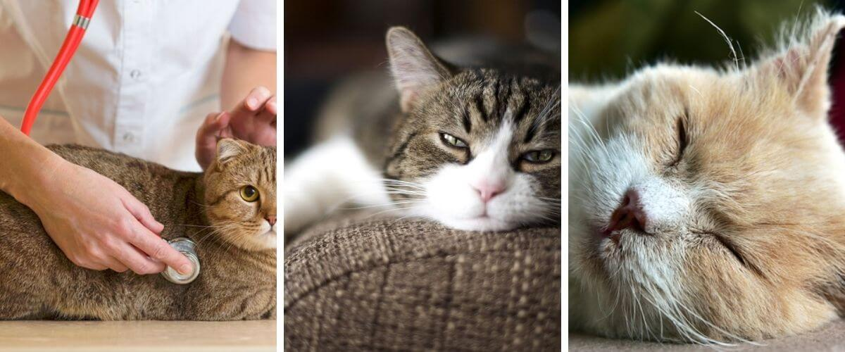 recognizing-signs-of-illness-in-cats