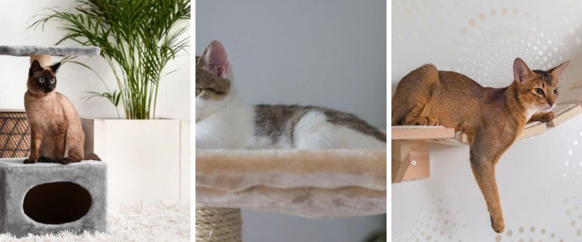 to-get-your-cat-to-use-their-cat-tree