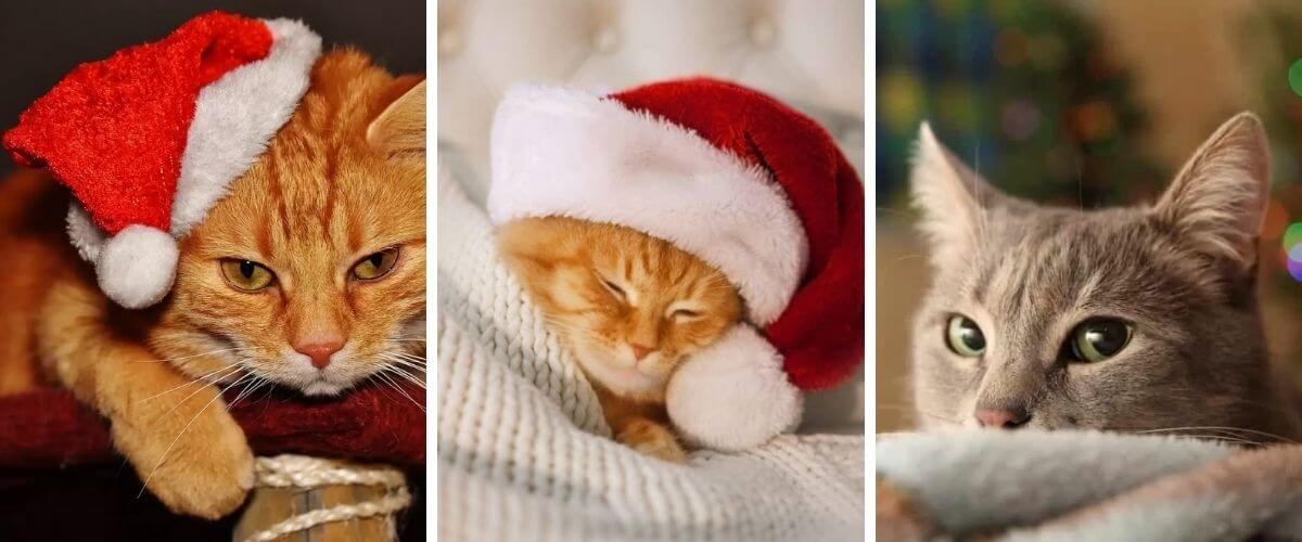 why-some-cats-dont-like-christmas