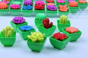 Magic Cactus Plant Flowers Dinosaur Eggs Growing In Water Soaking Expansion Hatching Toy