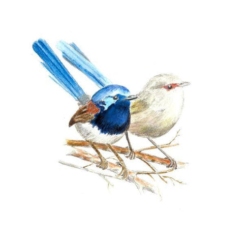 Blue Wren Thinking of You e-Greeting Card - The Leprosy Mission Australia Shop