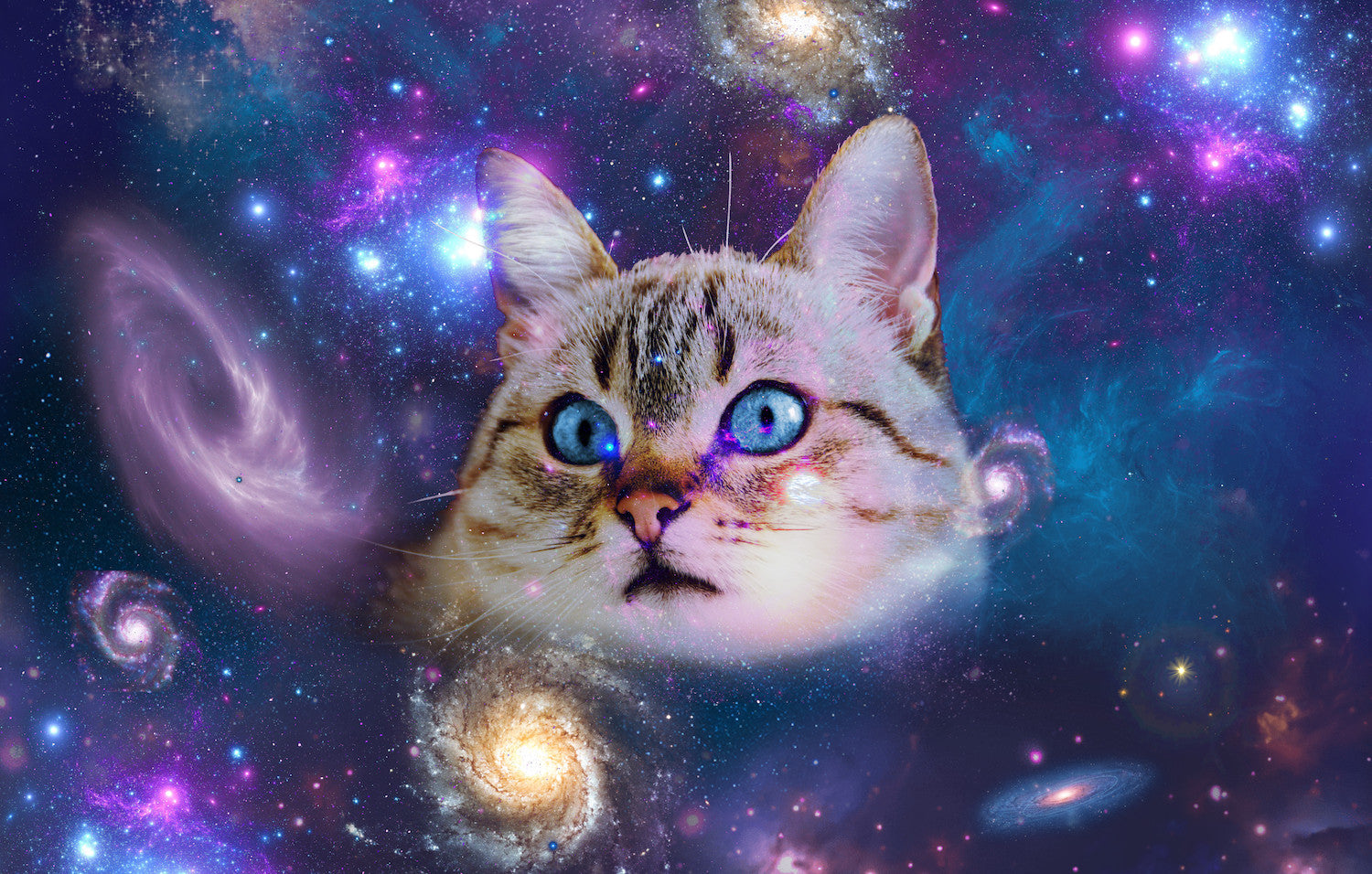 Universe Cat with galaxy print