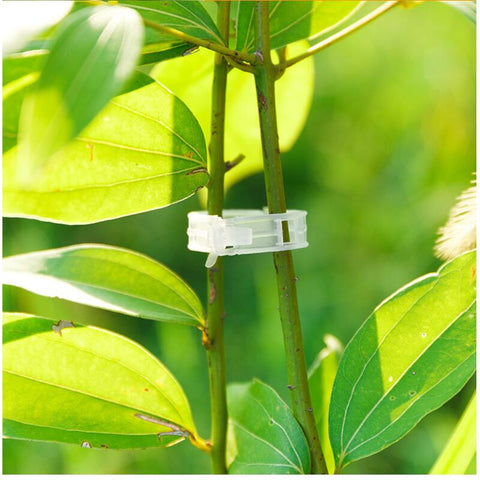 25mm Plastic Plant Support Clips clamps For Plants Hanging Vine Garden Greenhouse Vegetables Tomatoes Clips