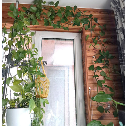 Plant climbing wall fixture trellis for climbing plants