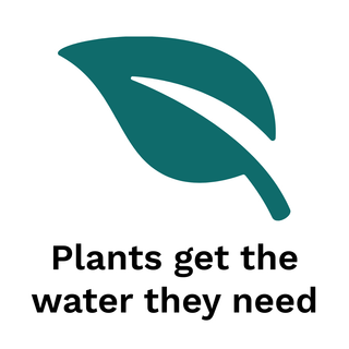 plant watering spikes
