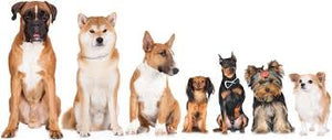 All Dog Breeds