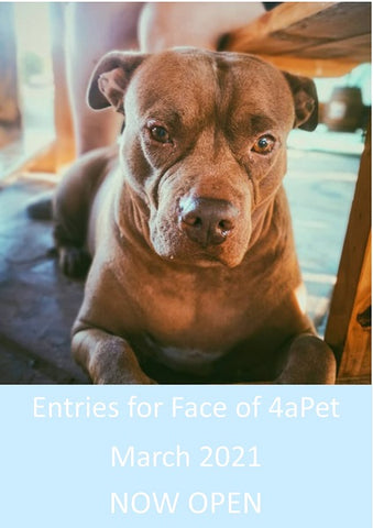 Entries now open for Face of 4aPet March 2021