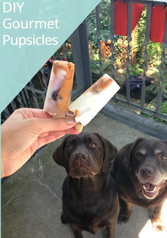 2 dogs staring at gourmet pupsicles