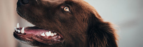 shop dog mouth and teeth care online