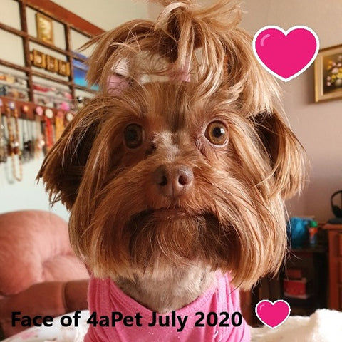 Winner of Face of 4aPet July 2020