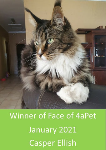 Entries now open for Face of 4aPet February 2021