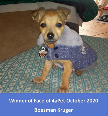 Winner of Face of 4aPet for November 2020