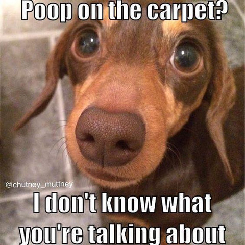 Poop on the carpet? pet joke