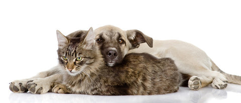 shop CDB oil for cats and dogs online