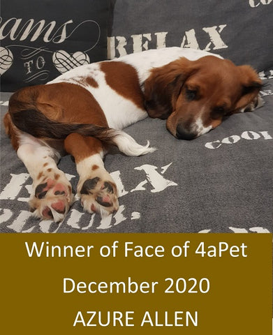 Entries now open for Face of 4aPet January 2021