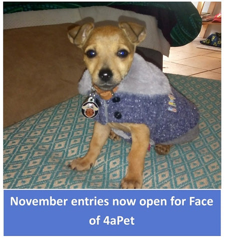 Entries now open for Face of 4aPet November 2020